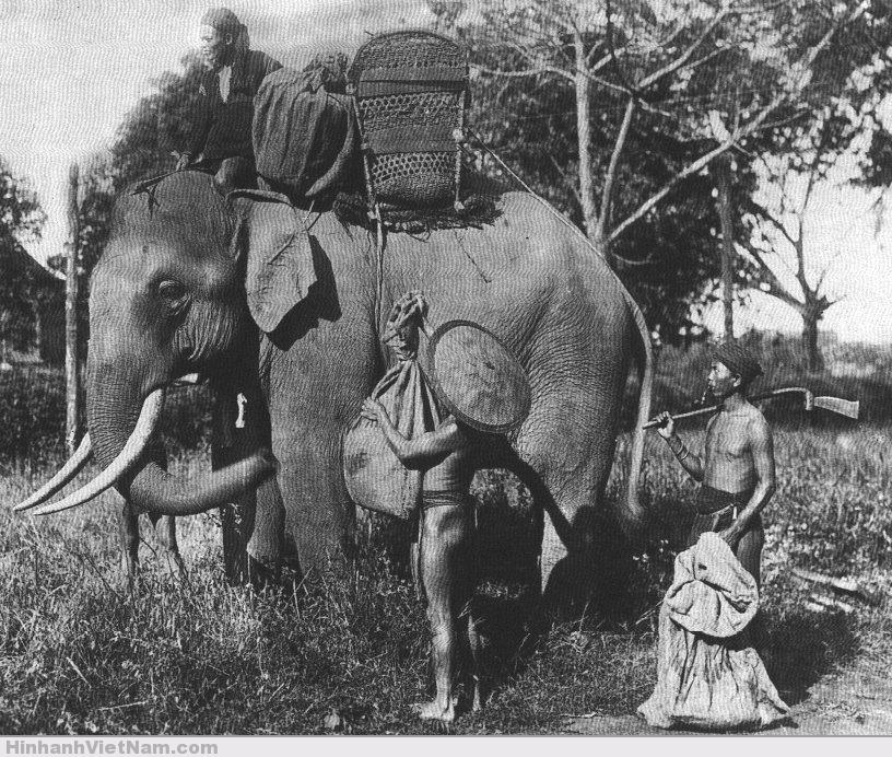 Nhiều khi phải đi bằng voi để tránh gặp thú dữ