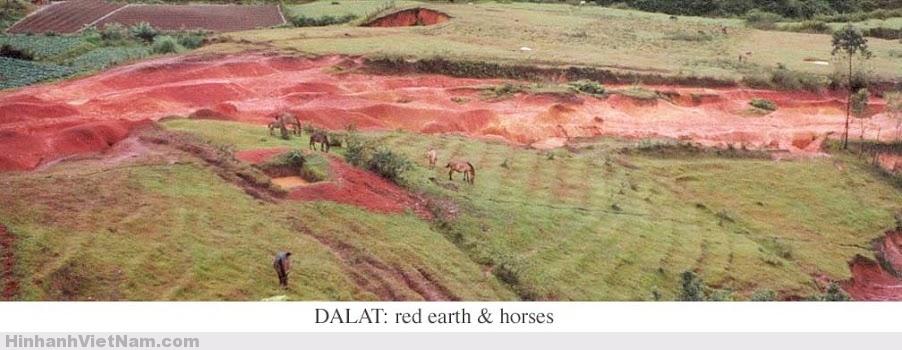 Đất đỏ Đà Lạt