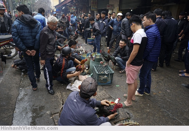 Chợ gà chọi là một mảng buôn bán trong phiên chợ cổ Hà Đông, họp vào các ngày 5, 10, 15, 20, 25, 30 Âm lịch hàng tháng. Chợ bán chủ yếu các loại gia súc gia cầm, cây cảnh, trong đó khu bán gà chọi đông nhất.